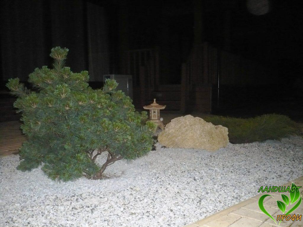 Бонсай гармонично смотрится в саду камней